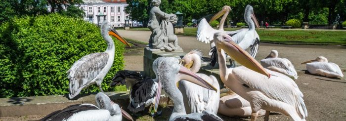 Umzugs-Info Friedrichsfelde