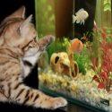 Alles halb so schlimm: Aquariumumzug